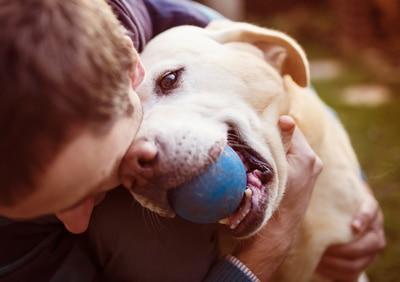 Hund gestorben Trauer Trost