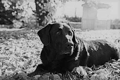 Trauer um einen Hund - Hilfreiches Wissen