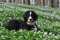 Ein neuer Hund – Wann ist der richtige Zeitpunkt?